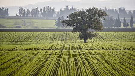 עץ השדה