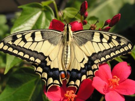 יופי הטבע