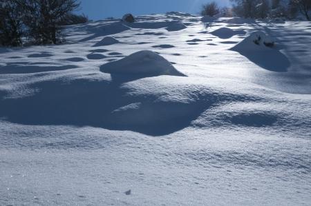 צללים בשלג