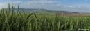 שדות שבעמק