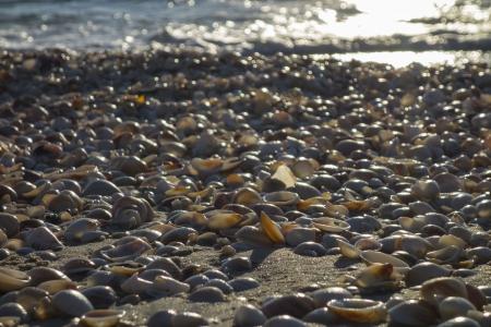 חופים הם לפעמי צדפים
