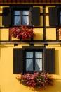 חלונות מטופחים