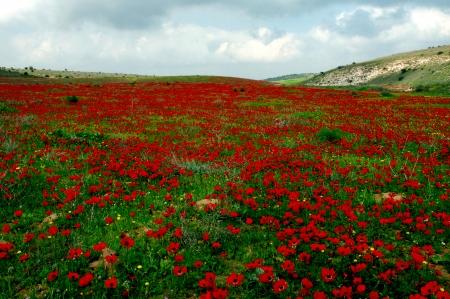 שטיח אדום