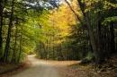 שביל ביער