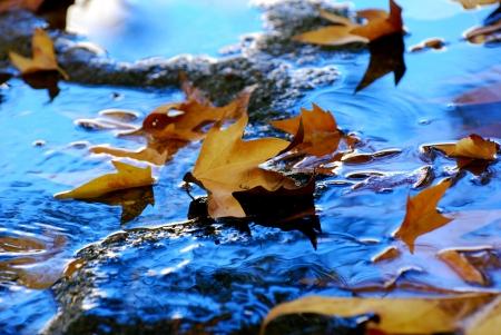 צף במים