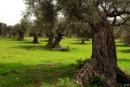 עצים עתיקים