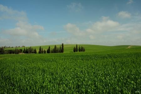 מרחבים ירוקים