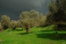 לפני הסערה
