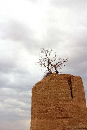 עץ נטוש