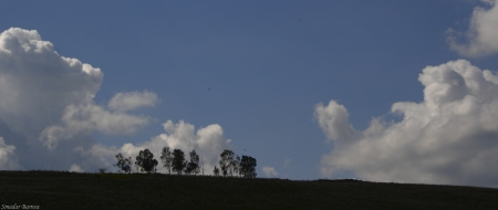 שומרי הגבעה - נוף עם עצים