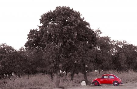 החיפושית האדומה