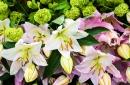 פסטיבל הפרחים בהולנד