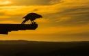 פלקון והקרן השמש האחרונה