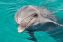 דולפין
