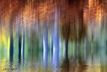 יער מואר