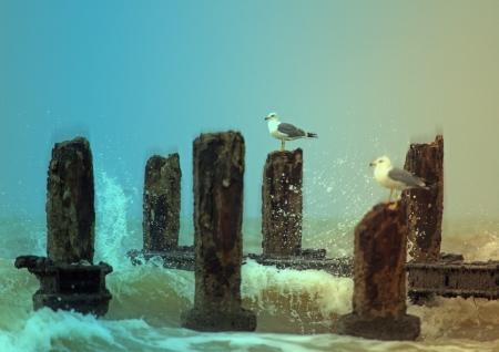 שחפים בגלים