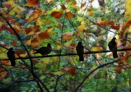 ציפורים ביער