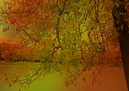 אדום באגם