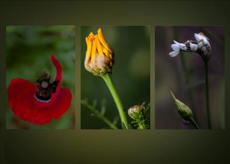 פרחי השדה הם גן עדן