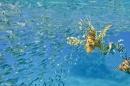זהרון צד דגים 1