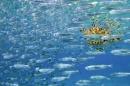 זהרון צד דגים 3