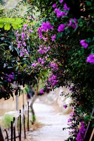 סימטה  עם פרחים