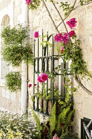 ורדים בחלון