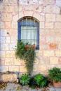חלון עם צמחים