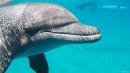 2 דולפינים