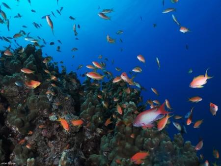צבעוני ודגים