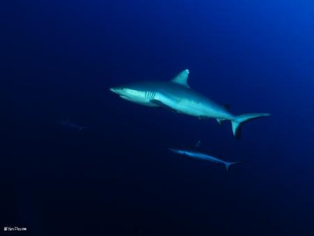 2 כרישים