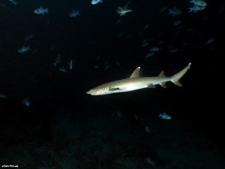 כריש בלילה 1
