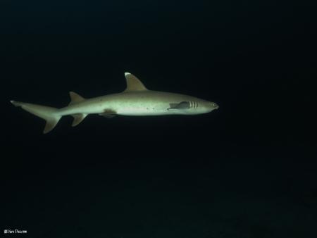כריש בלילה 3