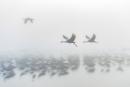 נדידת ציפורים