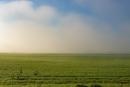 ענני שדה