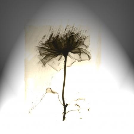 פרח שחור