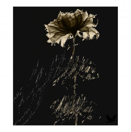 פרח שחור 3