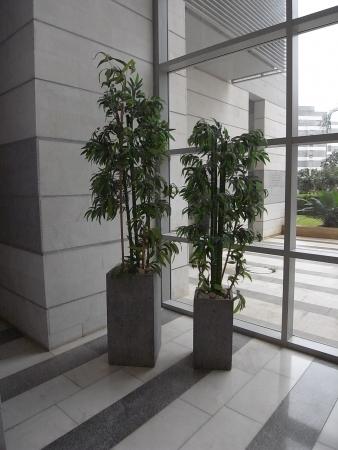 עיצוב של מבט לקיר היציאה מהבניין | עיצוב פנים