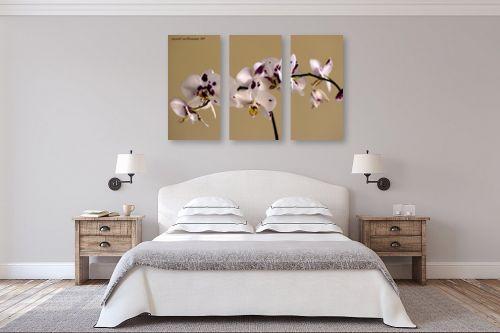 תמונה לחדר שינה - שרית סלימן - סחלבים - מק''ט: 139149