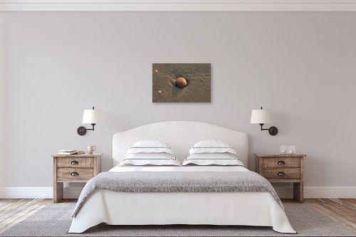 תמונה לחדר שינה - מיכל פרטיג - צדף - מק''ט: 56973