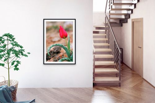 תמונה לבית - קובי פרידמן - צבעוני - מק''ט: 24225