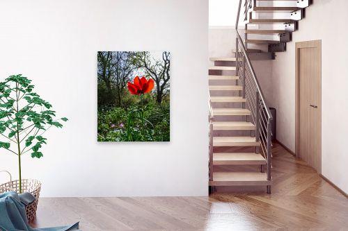 תמונה לבית - ארי בלטינשטר - אדום אדום - מק''ט: 326634