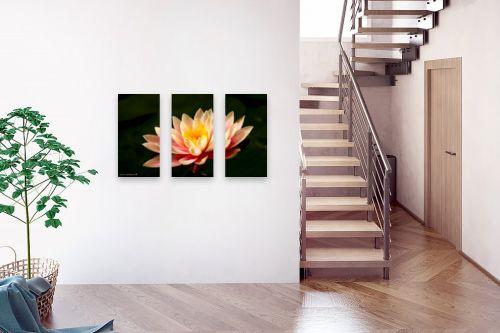 תמונה לבית - שרית סלימן - פרח המים - מק''ט: 80356
