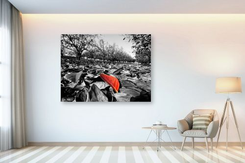 תמונה לבית - ארי בלטינשטר - צבעי שלכת - מק''ט: 127467