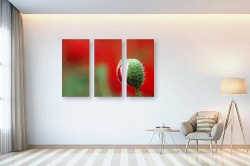 תמונה לבית - רן זיסוביץ - לב אדום - מק''ט: 138434