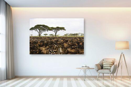 תמונה לבית - אייל ברטוב - סוואנה אפריקנית - מק''ט: 139538