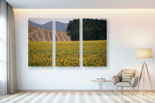 תמונה לבית - אורלי שטטינר - שדה חמניות וגבעות - מק''ט: 145718