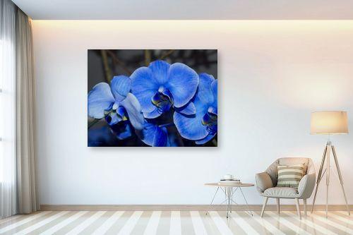 תמונה לבית - ארי בלטינשטר - סחלב כחול - מק''ט: 171663