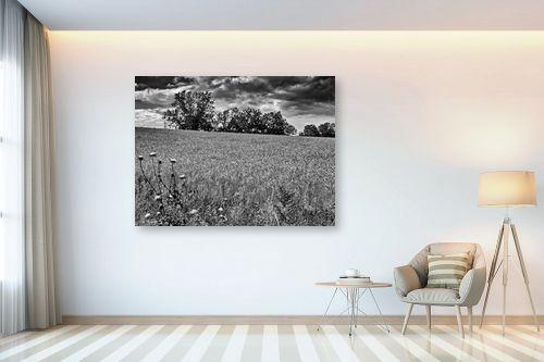 תמונה לבית - ארי בלטינשטר - שדות דגן לנצח - מק''ט: 202759