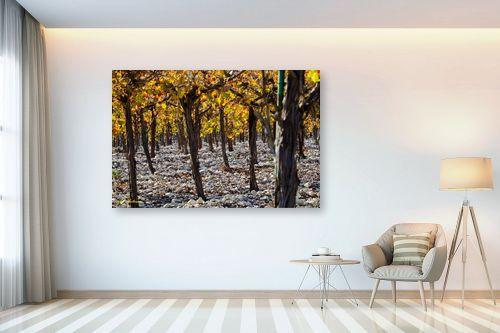 תמונה לבית - ארי בלטינשטר - ביער הגפנים - מק''ט: 218051